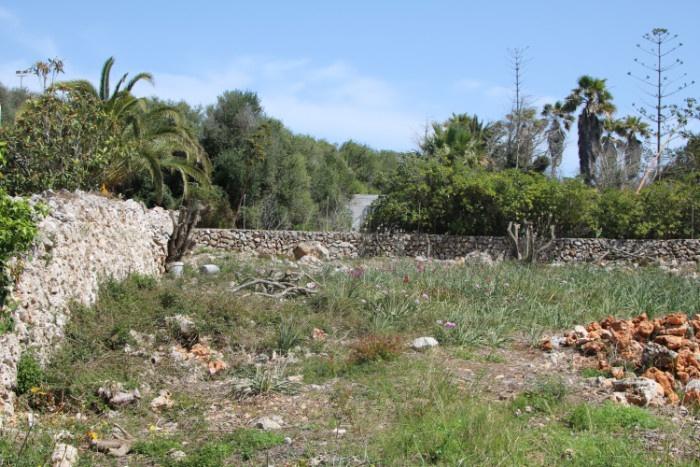 Osten (Botanischer Garten)